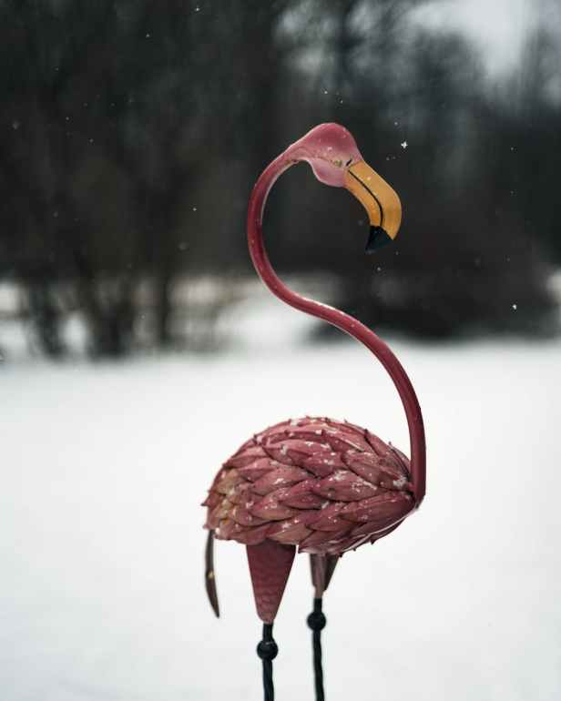 pink flamingo figurine in snowy area
