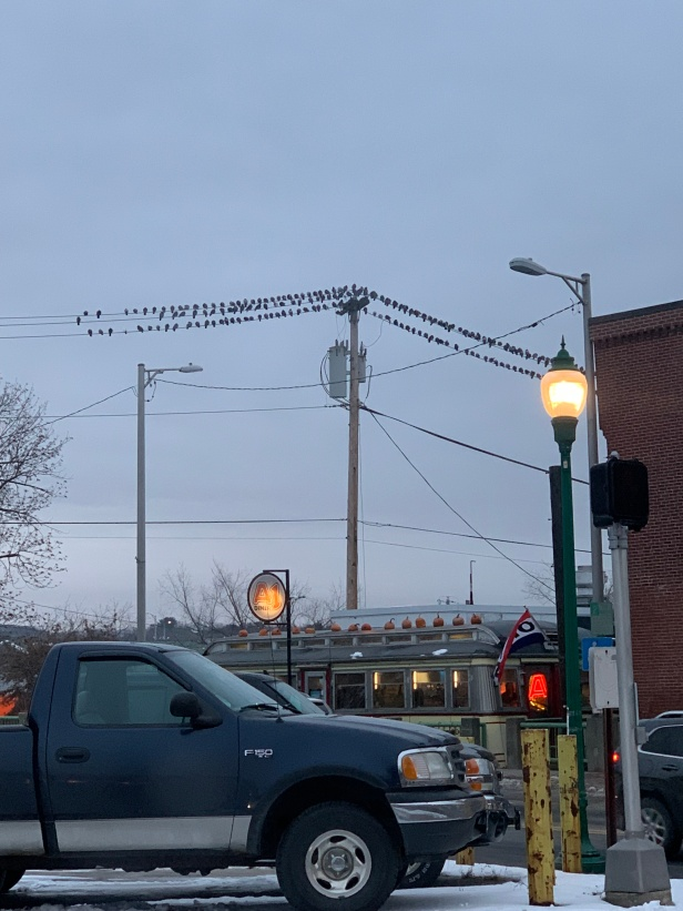 pigeons-on-a-wire